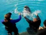 PHOTO: Veterans swim with dolphins as part of recovery.