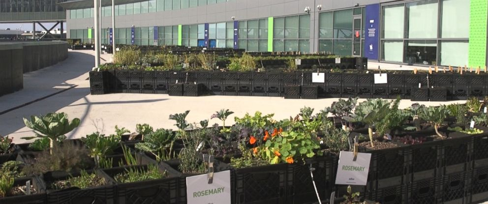 PHOTO: JetBlue opened an outdoor farm at JFK in October 2015.