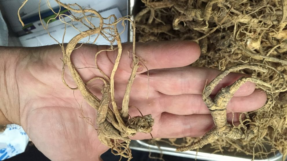 As Ginseng Prices Soar, Harvesters, Law Enforcement Fight to