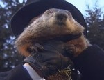 """PHOTO:An early spring is on the way, according to groundhog """"Punxsutawney Phil."""" When the Pennsylvania groundhog emerged from his dwelling at Gobblers Knob on Feb 2, 2013, he did not see his shadow."""