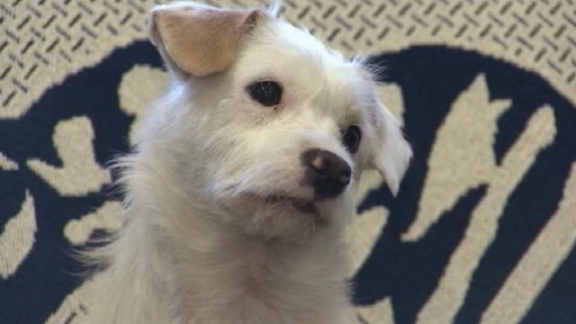 San Diego Politician's Pup Found in Fresno
