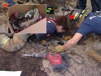 Video: 10 puppies pulled from Tulsa storm drain.