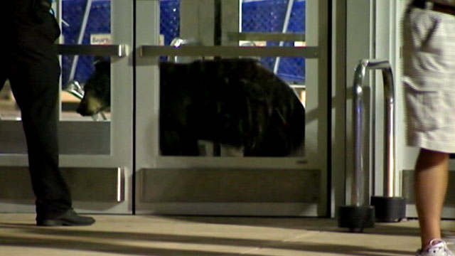 PHOTO: Bear walks into Pittsburgh Mills Mall