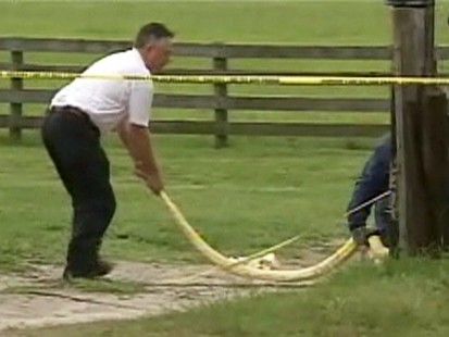 VIDEO: 911 call placed after a toddler was strangled by a python.