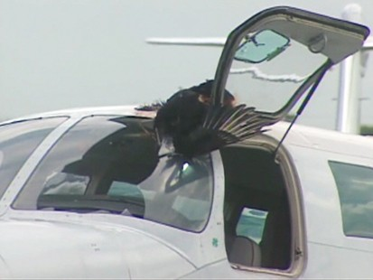 VIDEO: Turkey vulture collides with plane.