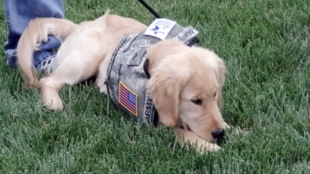 PHOTO: Wounded warriors train service dogs to help other injured servicemen and women.