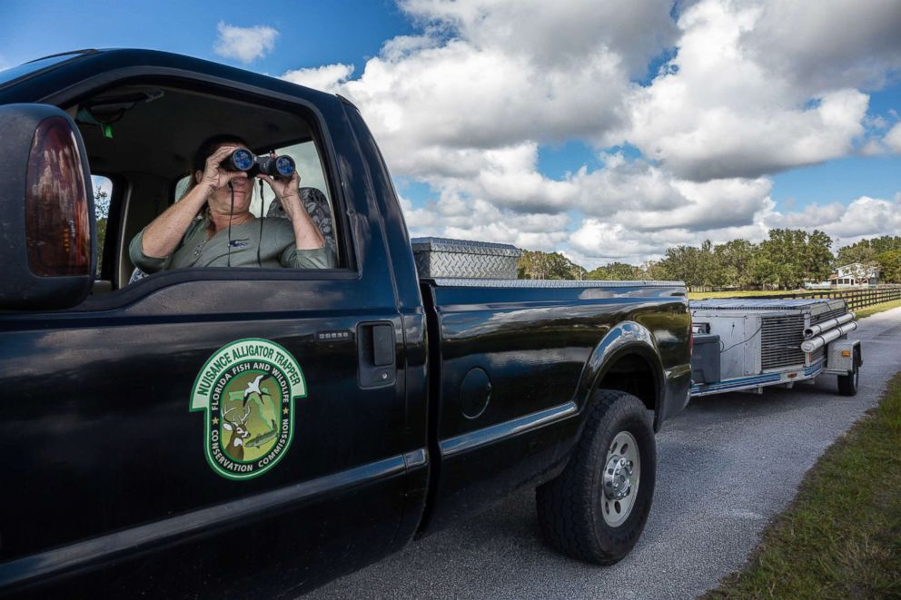 PHOTO: Julie Harter uses binoculars to look at a trap she had set days earlier, to determine if an alligator took the bait.