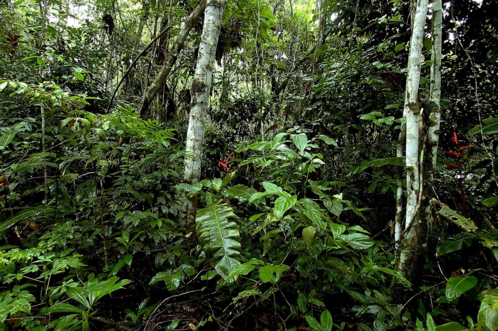 PHOTO: The tropical rain forest in northern Mato Grosso, Brazil.
