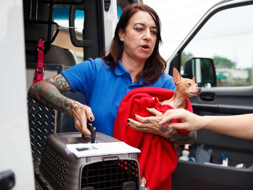 PHOTO: Laura Gretch, Humane Rescue Alliance transport manager, holds Frances, an 8 year-old Chihuahua mix as she helps unload 26 cats and dogs arriving at Humane Rescue Alliance in Washington, Sept. 11, 2018, from Norfolk Animal Care and Control.