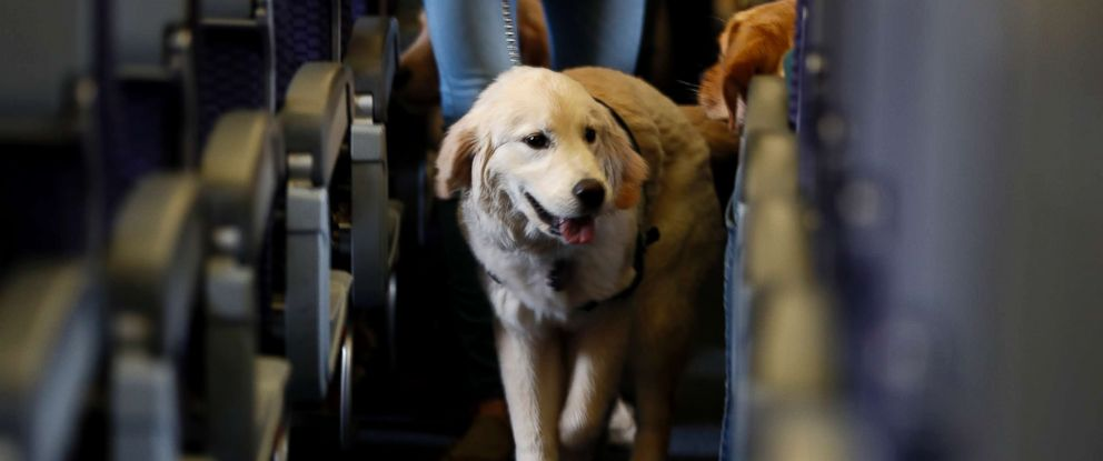PHOTO: In this April 1, 2017, file photo, a service dog strolls through the aisle inside a United Airlines plane at Newark Liberty International Airport in Newark, N.J.