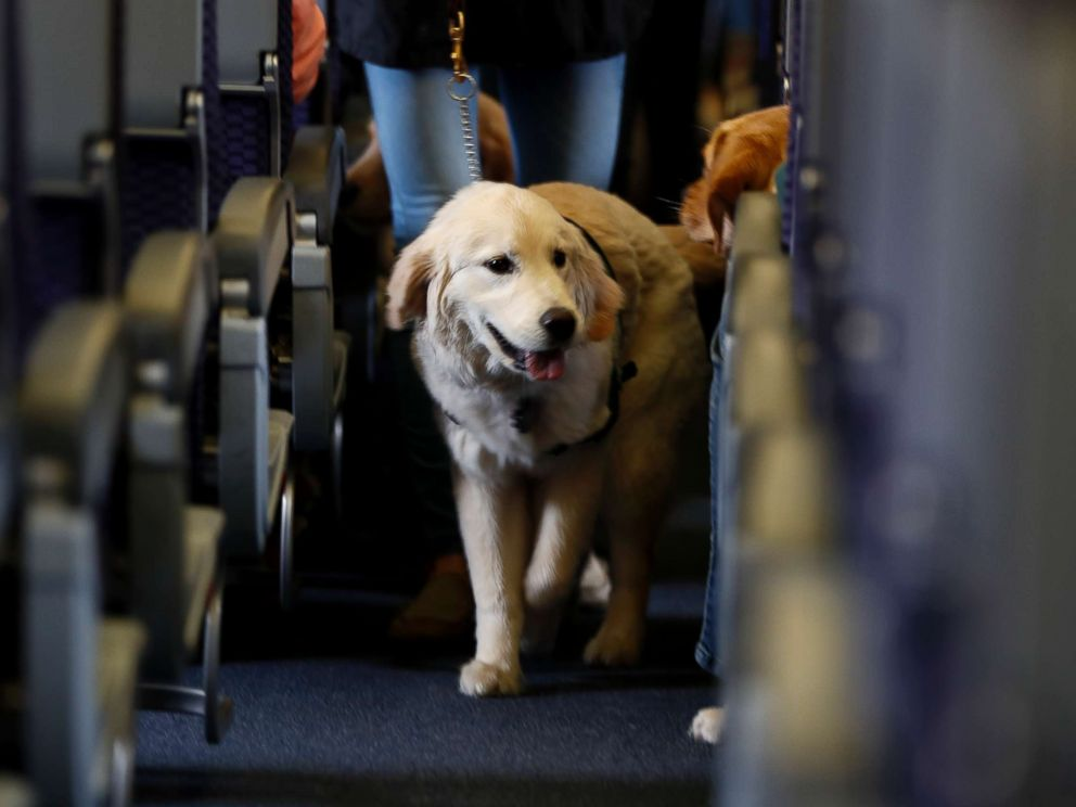 New airline regulations come into effect for emotional support pets