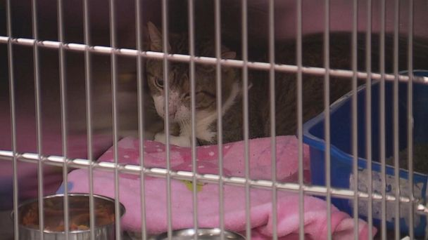 88 cats and 1 dog living in 'deplorable conditions' removed from Michigan woman's home