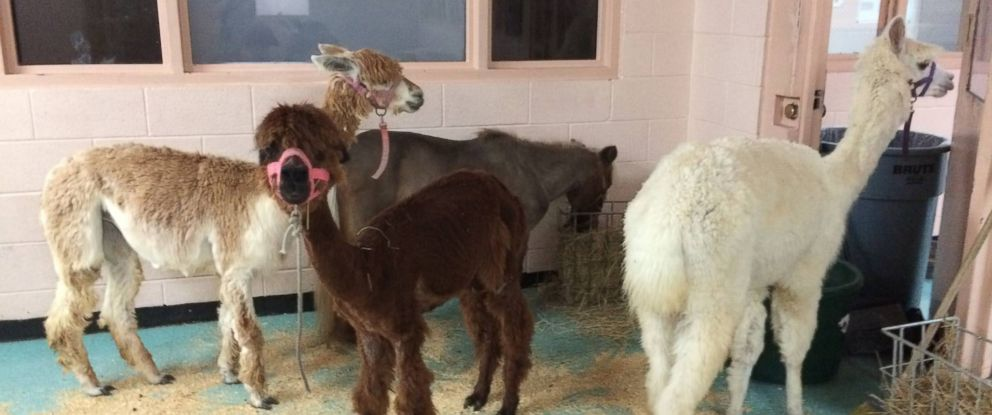 County jail takes in array of wild animals during Hurricane
