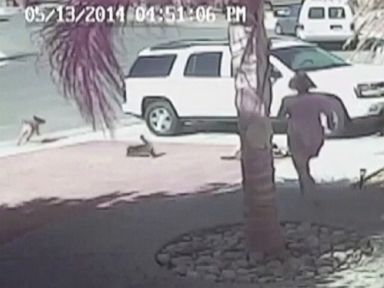 Surveillance video shows a California familys cat tackle the dog and chase it away.