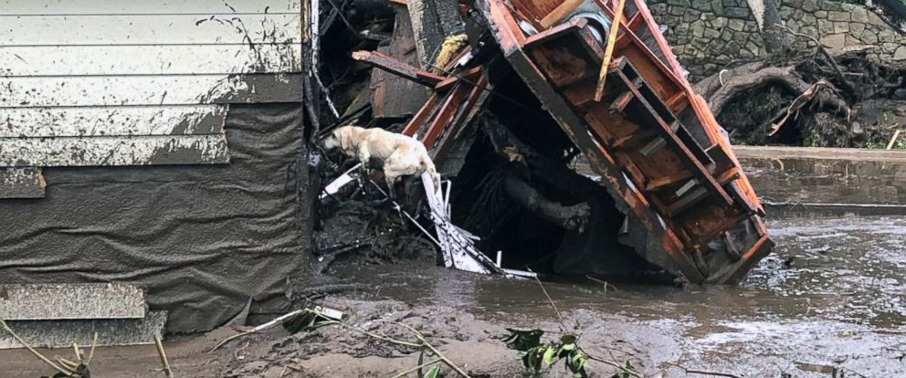 In this photo provided by Santa Barbara County Fire Department, Santa Barbara County Fire Search Dog Reilly looks for victims in damaged and destroyed homes in Montecito, Calif.