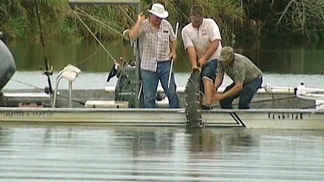 PHOTO: An 11-foot alligator that attacked a swimmer is pulled from the water after it was killed, July 9, 2012 in the Caloosahatchee River.