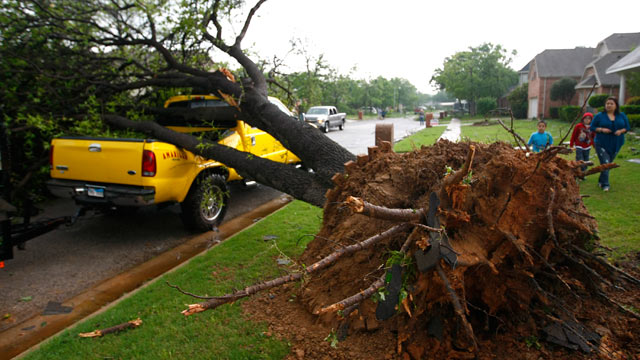 PHOTO: A fallen tree crushes a truck in Arlington, Texas Tuesday, April 3, 2012.