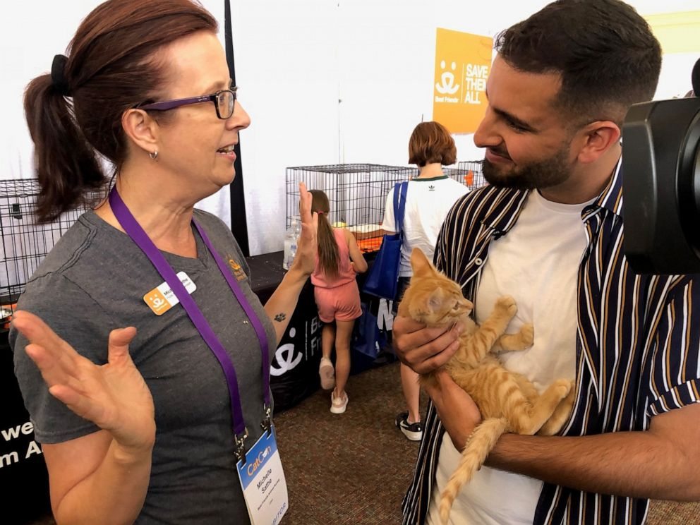 PHOTO: Hundreds of cats are available for adoption at CatCon.