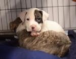 ASPCA Seeks Owners of Sandy Pets