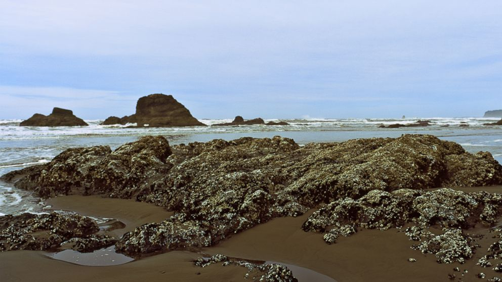An undated stock photo of a beach in Washington State.