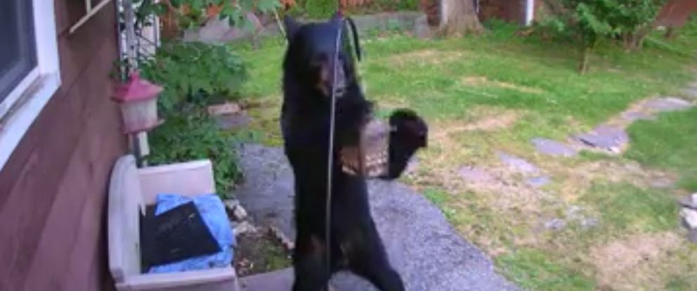 PHOTO: A New Jersey dog defended his neighbors home after he saw a bear was rummaging through the backyard.