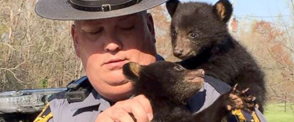 PHOTO: Virginia State Police Sr. Trooper D.H. Cepelnik rescued two bear cubs after their mother was struck and killed in an accident.