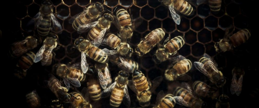 PHOTO: A closeup of honey bees at work in their hive is pictured in this undated stock photo.