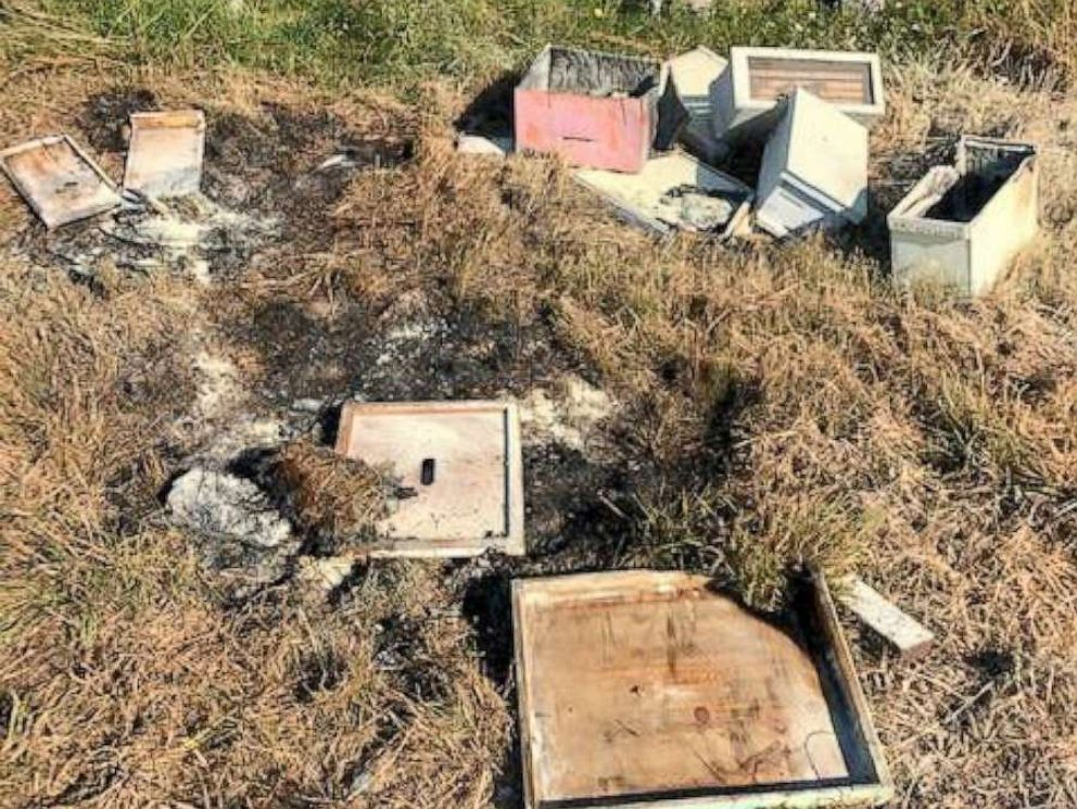 PHOTO: More than half a million bees have been killed after 20 hives were torn apart and burned in Alvin, Texas.