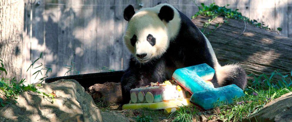 PHOTO: Giant panda Bei Bei eats his frozen 4th birthday cake at the Smithsonian National Zoo in Washington, D.C, Aug. 22, 2019.