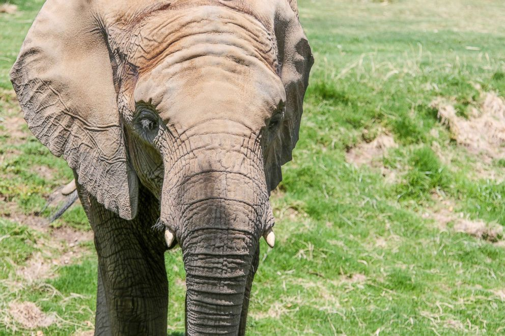 An 11-year-old African elephant, Bets, died at the Fresno Chaffee Zoo on Feb. 9, 2019.