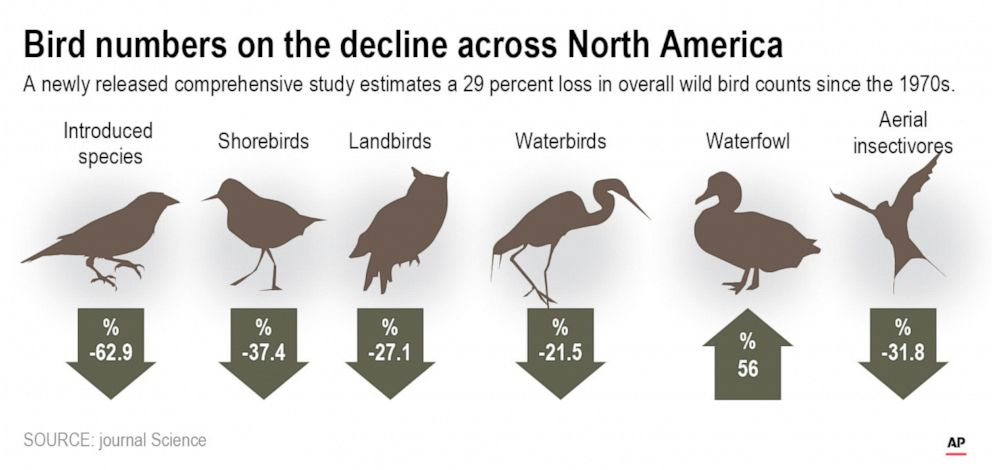 PHOTO: A new study finds there are nearly 3 billion fewer wild birds flying in North American skies than in 1970.