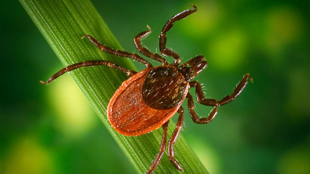 Why this tick season may be bad -- and how to protect yourself