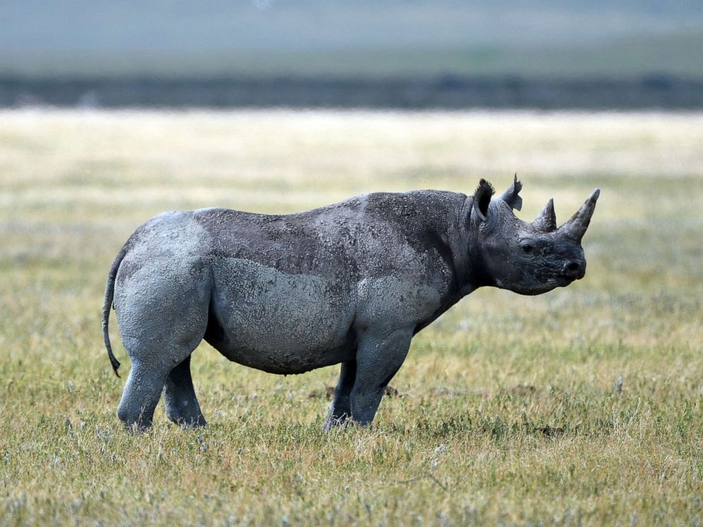 Trump administration reportedly approves trophy hunter's permit for endangered rhino remains