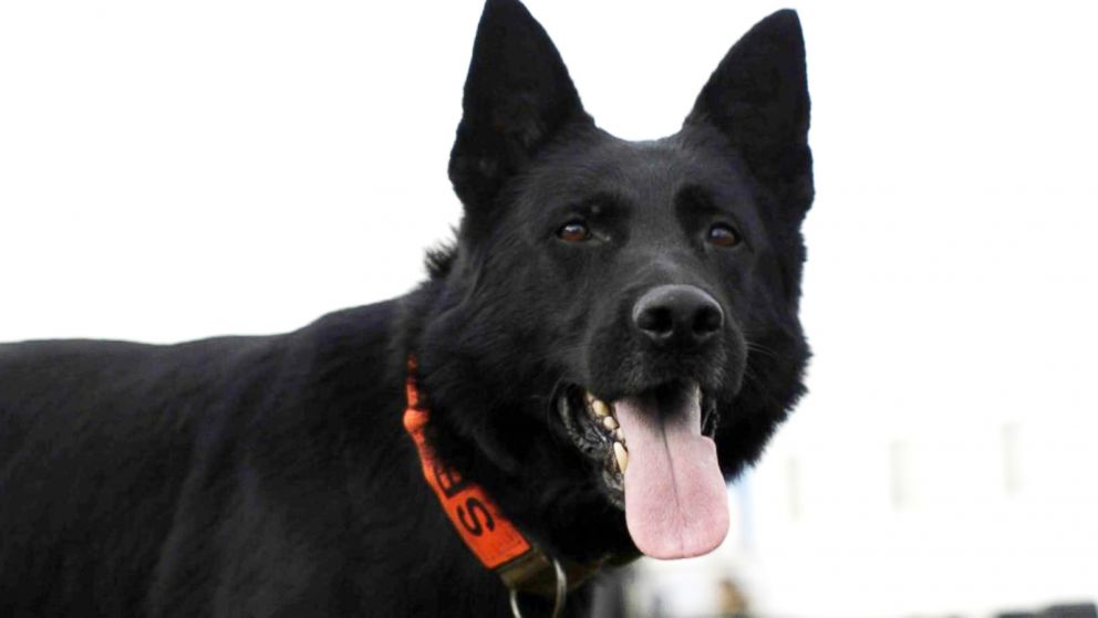 PHOTO: Bruno is one of the new canines who joined the ranks of FEMAs first responders.