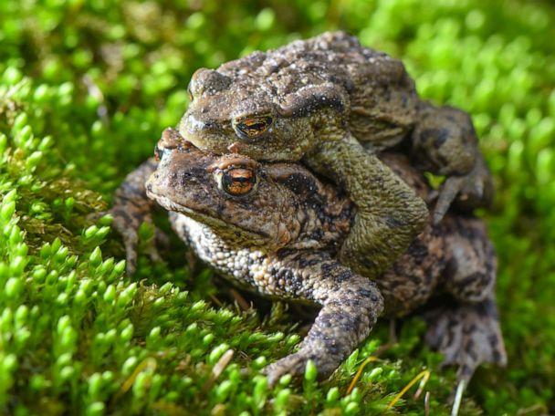 Poisonous toads infest suburban Florida neighborhood