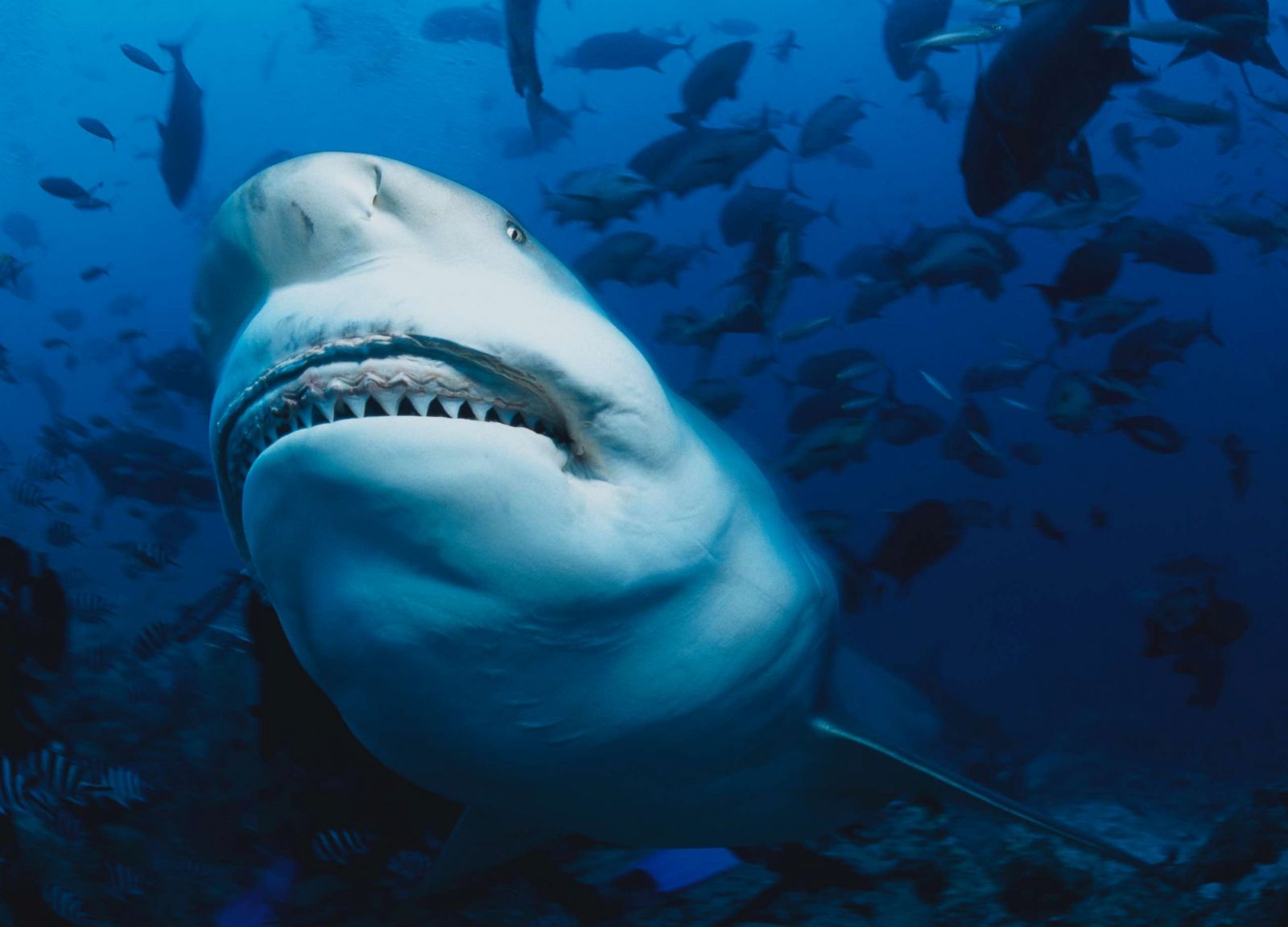Sharks are changing where they swim, breed and hunt along
