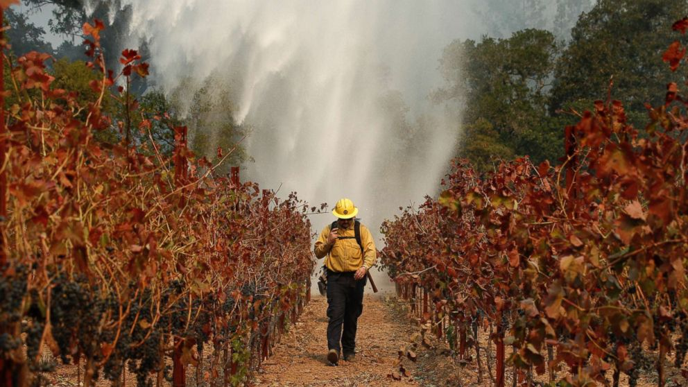 Firefighter Chris Oliver walks between grape vines as a helicopter drops water over a wildfire burning near a winery, Oct. 14, 2017, in Santa Rosa, Calif.
