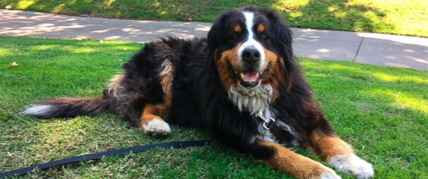 Family Dog Reunites With Family Alive And Cheerful From Wildfire