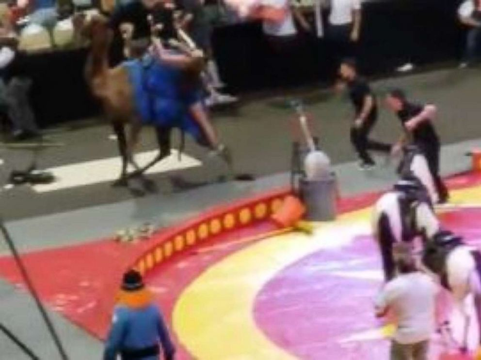 PHOTO: A camel got loose and injured seven people, including six children, at the Shrine Circus in Pittsburgh on Sunday, Sept. 16, 2018.