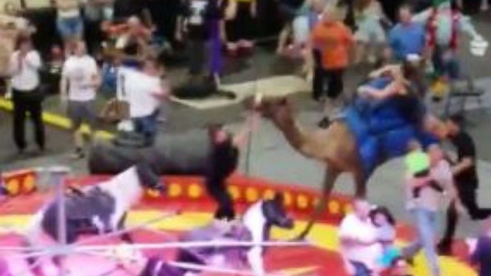 K michelle camel