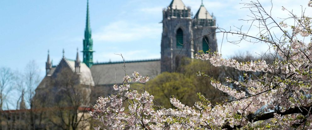 PHOTO: Cherry blossom trees are seen at Branch Brook Park with the Cathedral Basilica of the Sacred Heart at a distance, April 26, 2018, in Newark, N.J.