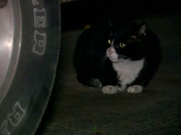 Refusal to stop feeding feral cats could land man in jail
