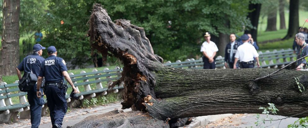 PHOTO: Police officers inspect an area where a massive tree came down injuring a mother and her three young children, Aug. 15, 2017, in New York City.
