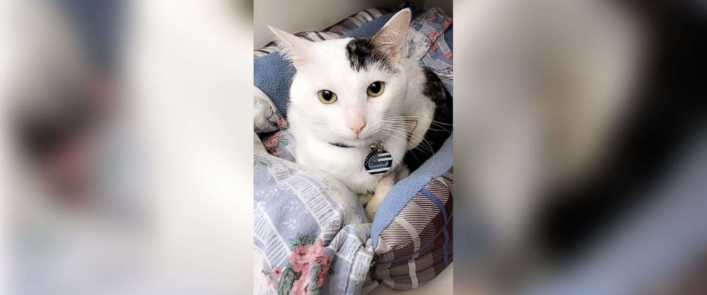 PHOTO: A cat named Chester is pictured in this undated photo. Chester has made a full recovery and is being cared for in a loving home, after being tortured and abandoned in a garbage can in Staten Island, N.Y.