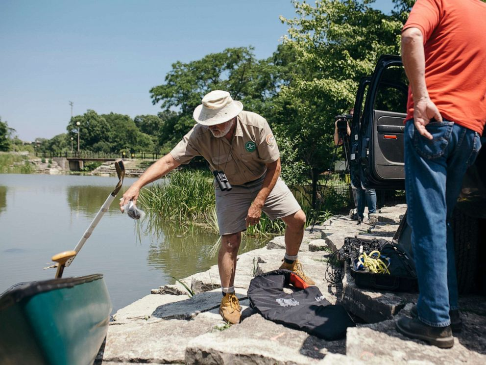 PHOTO: A volunteer with the Chicago Herpetological Society who goes by Alligator Bob sets out in his canoe to find and document an alligator spotted in Chicagos Humboldt Park lagoon, July 9, 2019.