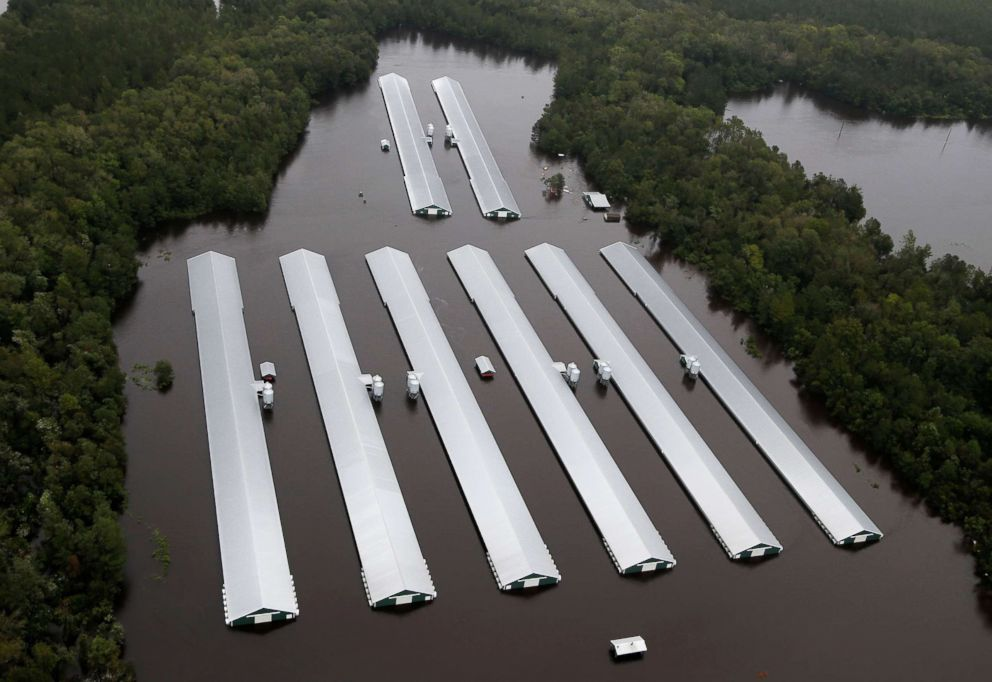 Chicken farm buildings are inundated with floodwater from Hurricane Florence near Trenton, N.C., Sept. 16, 2018.