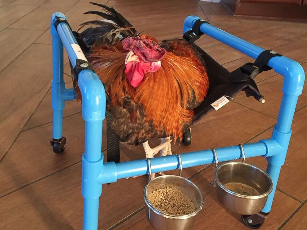 PHOTO: Roo sits up straight to eat in his therapy wheelchair in this an undated photo.