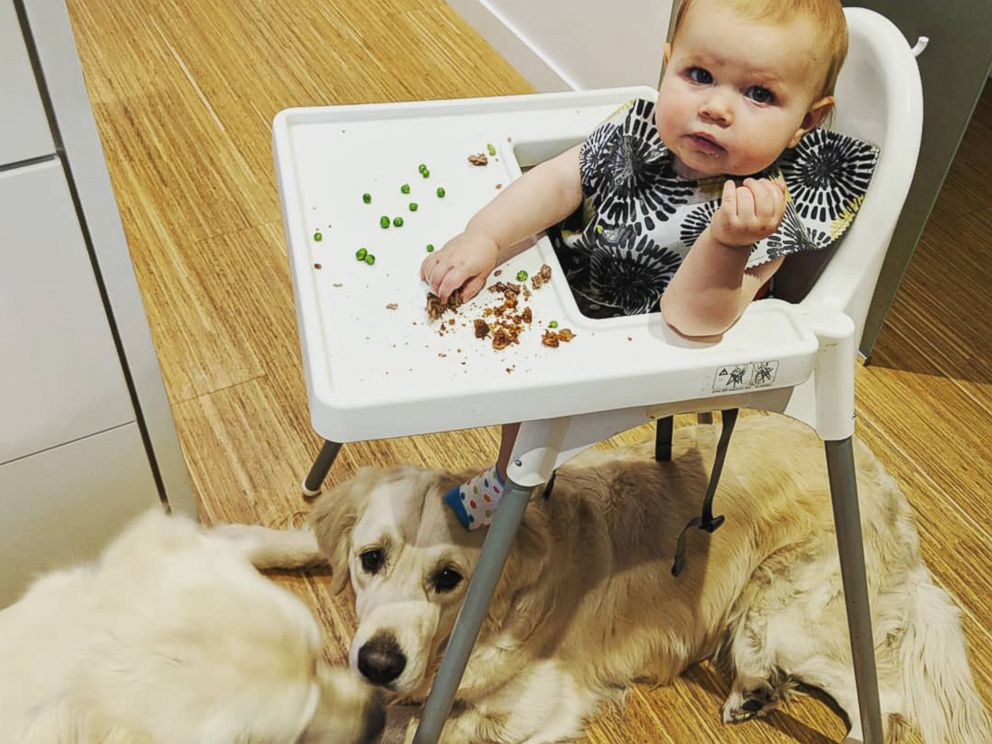 PHOTO: Chloe Cardinal, 15 months, shares her meal with Colby and Bleu.