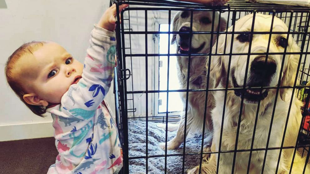Chloe Cardinal, 15 months, tries to help Colby and Bleu break out out of their cage.