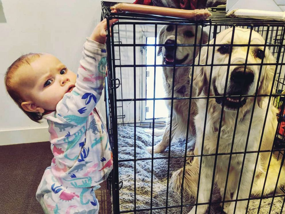 PHOTO: Chloe Cardinal, 15 months, tries to help Colby and Bleu break out out of their cage.